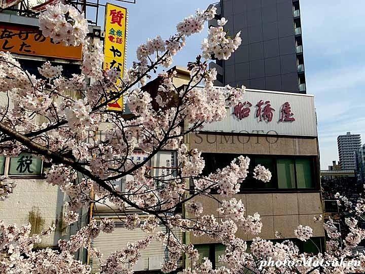 亀戸駅前歩道橋の桜 さくらの日(3月27日 )